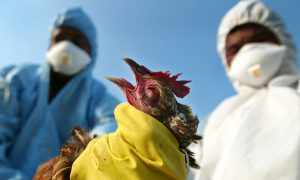 An outbreak of bird flu in India in 2008 prompted authorities to temporarily ban the sale of poultry.